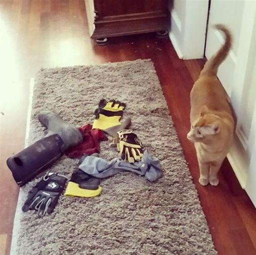 橘貓有偷鞋怪癖!飼主無奈PO「一車戰利品」:歡迎來認領(圖/IG)