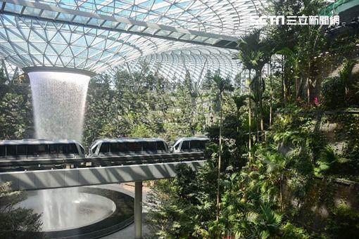 老田,新加坡,星耀樟宜,寶可夢中心,資生堂森林谷,室內瀑布,樟宜機場