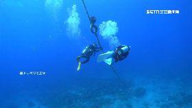 珊瑚被打樁1200