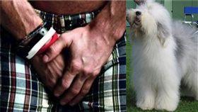 下體 生殖器 牧羊犬 (圖/PIXABAY 維基)