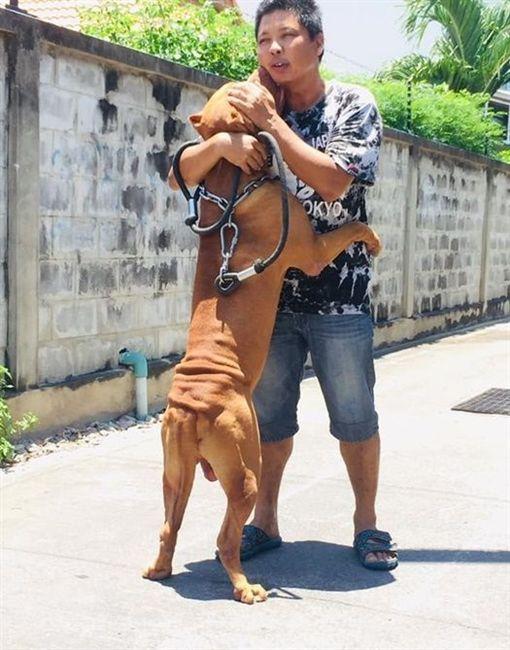 泰國,狗狗與主人不離不棄(圖/翻攝自臉書)