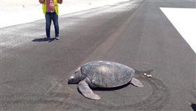 大自然,馬爾地夫,綠蠵龜,產卵,機場