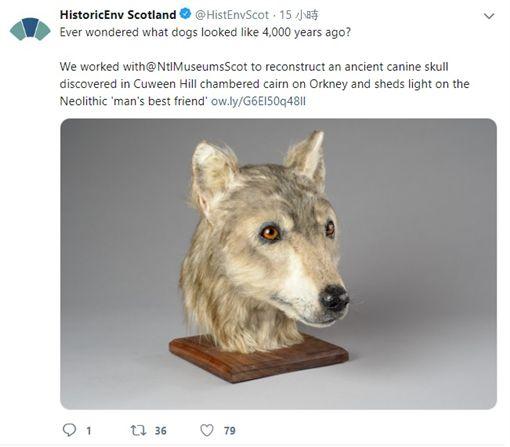 Orkney,頭骨化石,狗,Historic Environment Scotland(圖/翻攝Historic Environment Scotland推特)