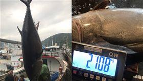 (圖/翻攝畫面)宜蘭,蘇澳,第一鮪,黑鮪魚