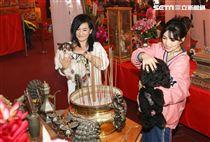 大甲媽祖北巡駐駕台北首度開放寵物「稜轎腳」,歌手張蓉蓉、談詩玲。(記者林士傑/攝影)