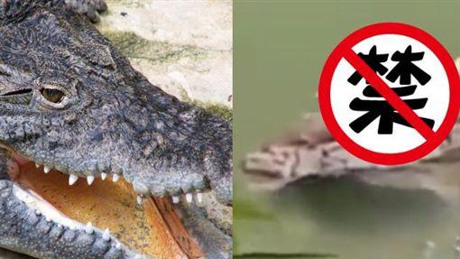 鱷魚,巴西,人腿,恐怖,河邊https://www.flickr.com/photos/sgsprzem/3512844362/in/photolist-9um8Rp-bo2Dwe-bsVuHt-br3Dpd-bzTr4U-a32zyZ-emumpk-QbPp-mjv88W-394gop-pvYKtz-2P6Uwo-jU3QE-qwaqJs-BKGtS-X8juuF-duqVB-9BJU68-6
