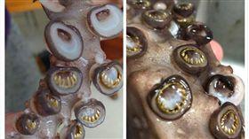 魷魚腳藏「小金牙」,網友密集恐懼症爆發。(圖/翻攝自XXX)