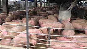 高雄市政府輔導並補助畜牧業者建置沼氣發電設備,已有3間畜牧業者化豬糞為綠能,每年發電量約370萬度,可說一舉兩得。(高雄市農業局提供)中央社記者王淑芬傳真 108年4月16日