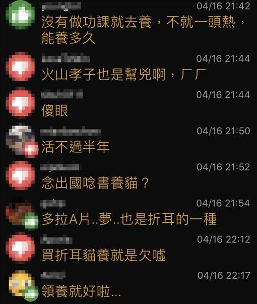 摺耳貓,企鵝妹/翻攝自PTT