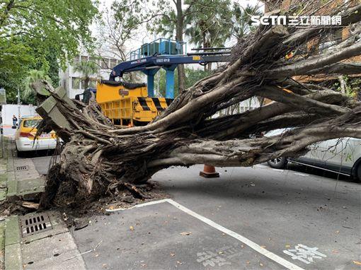 台北地檢署,路樹,倒榻,地震。潘千詩攝影