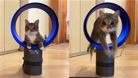 家中有養毛小孩的人應該都知道,寵物時常會做出一些無厘頭的舉動,讓人哭笑不得,像是這隻來自沖繩的貓皇Oki,居然把無葉片風扇當成是風火輪,穿越中間的風圈跳了過去,畫面相當逗趣。(圖/翻攝自臉書琉球皇Oki)