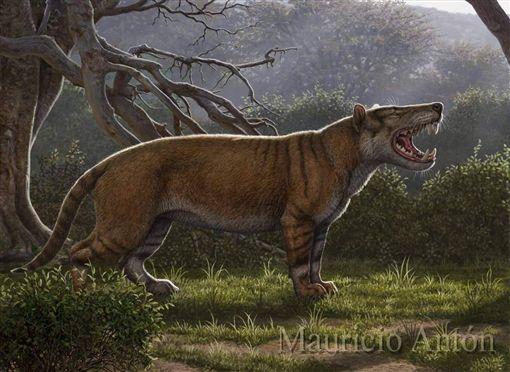 古生物學家17日表示,挖出名為Simbakubwa kutokaafrika(班圖語,非洲巨獅之意)的新物種下顎、牙齒與部分骨骼,可能是史上最大肉食哺乳類動物之一。(圖/翻攝自Mauricio Anton臉書)