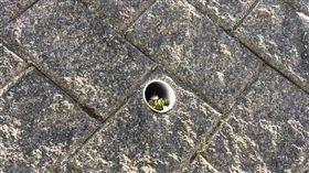 牆上水管有蛇住在「高級住宅」。(圖/翻攝自爆笑公社」)