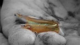 南美,亞馬遜,卷鬚寄生鯰,尿液 (圖/翻攝自YouTube River Monsters™)