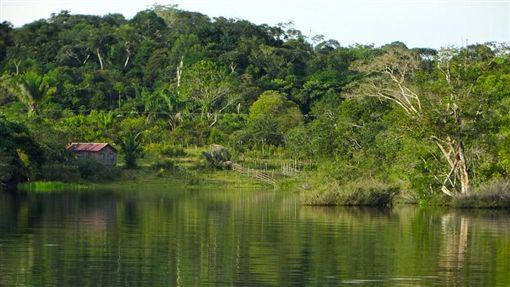 南美,亞馬遜,卷鬚寄生鯰,尿液 (圖/取自Pixabay)