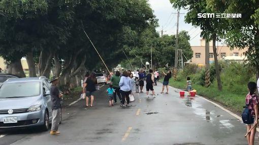雨後落果害摔車!封路1公里邀民眾「打芒果」