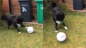 郵差先生陪狗狗踢足球。(圖/翻攝自Amy Barbour推特)