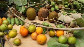 奇異果有紅橙黃綠、酸甜苦辣 一窺新奇超有感的奇異果