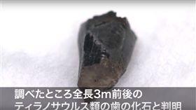 日本,琥珀,體驗,化石,白堊紀,暴龍,校外教學, 圖/翻攝自YouTube