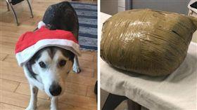 出國玩3天…愛犬離奇慘死綑成「黃色包裹」 她一見秒淚崩(圖/翻攝自Kirsten Kinch臉書)