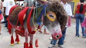 (圖/翻攝自推特)哥倫比亞,驢子,驢節,新娘