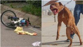 騎車上學遇惡犬,男童生殖器被咬掉。(圖/翻攝自微博、維基百科)