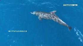 東琉線海豚1600