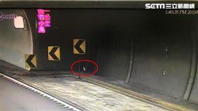 史上第一次!「一隻鳥飛進雪隧」隧道急封閉半小時