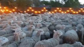 (圖/翻攝自YouTube)美國,加州,綿羊,後院
