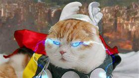(16:9)鬆餅裝扮成漫威英雄角色。(圖/翻攝自Waffles the Cat)