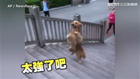 汪汪「超強平衡感」 兩腳爬樓梯驚艷網友:太神了!