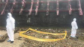 基隆海邊動物腐屍 確認為死狗海巡署第二岸巡隊表示,海巡人員28日下午在基隆潮境公園保育區海邊巡邏時,發現一隻死亡海豚及一具腐爛的不明動物屍體,海巡人員不敢大意,立即封鎖及管制現場,並啟動防疫相關作為,所幸經確認為犬屍。(海巡署第二岸巡隊提供)中央社記者沈如峰基隆傳真 108年4月28日