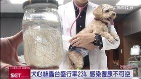 狗,蚊子,心絲蟲,預防藥