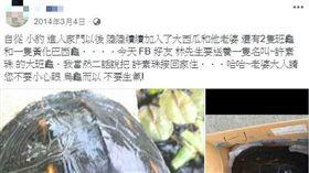 被刻字淡水龜,許素珠。(圖/翻攝自臉書)