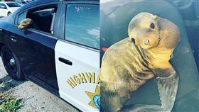 美國,舊金山,海獅,警察 (圖/翻攝自舊金山警局臉書)