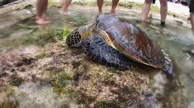 小琉球,美人洞,海龜,保育類,魚叉(圖/翻攝自小琉球聯盟臉書)