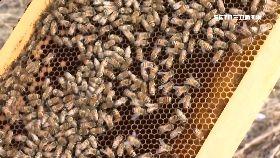 蜂農沒有蜜1800