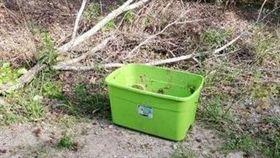 綠盒子在中午高溫下狂曬 好奇路人探頭…驚見最殘忍畫面(圖/翻攝自Rescue Dogs Rock NYC)