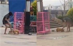 中國大陸,女飼主持木板打狗,秋田犬(圖/翻攝自梨視頻)