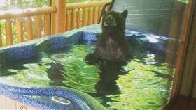 黑熊泡澡。(圖/翻攝自WATE Laura Halm FB)