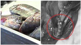 他料理自己釣的魚「魚腸內挖出閃亮戒指」,霸氣轉身求婚女友!(圖/翻攝自鏡報、資料照)