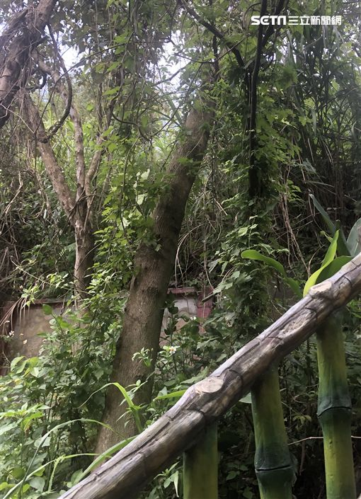 廖女將兒子埋在富德公墓階梯旁的樹叢(翻攝畫面)