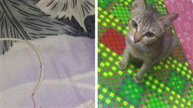 玩壞耳機線被罵!貓貓出走1小時 回家叼「恐怖禮物」賠罪(圖/翻攝自Kami Pecinta Kucing臉書)