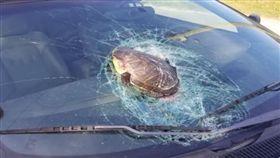 烏龜天外飛來砸破車輛擋風玻璃。(圖/翻攝自YouTube)