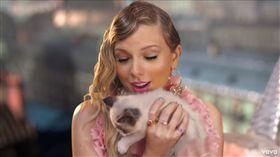 泰勒絲,貓,收編(圖/翻攝自Taylor Swift Youtube)