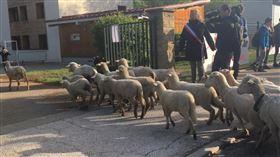 阿爾卑斯山綿羊入學。(圖/翻攝自 bleu_isere 推特)