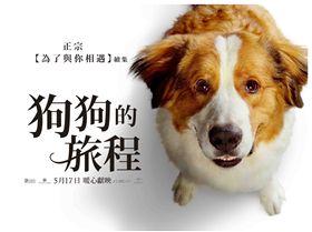 柏萊富,狗狗,狗糧,測驗,天然寵糧