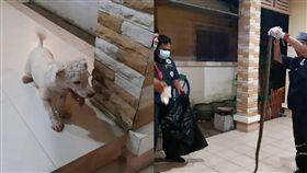 貴賓犬,泰國,狗,巨蟒,蛇,警消,夥伴,救援,忠犬, 圖/翻攝自TNEWS