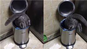 黑貓鑽垃圾桶。(圖/翻攝自●【爆笑公社】●FB)