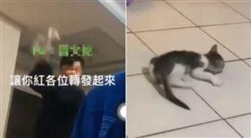 貓咪,虐待,高職生,虐貓,網路霸凌(圖/翻攝自臉書)
